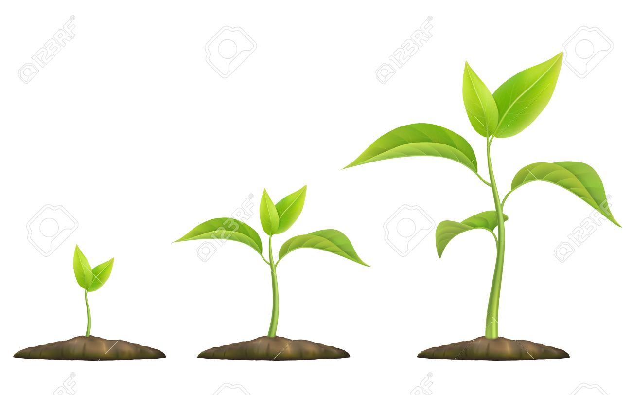 Tapes De Croissance Des Plantes Le Germe Vert Pousse Du Sol Illustration Vectorielle Réaliste Cela Symbolise La Vie Le Développement Et
