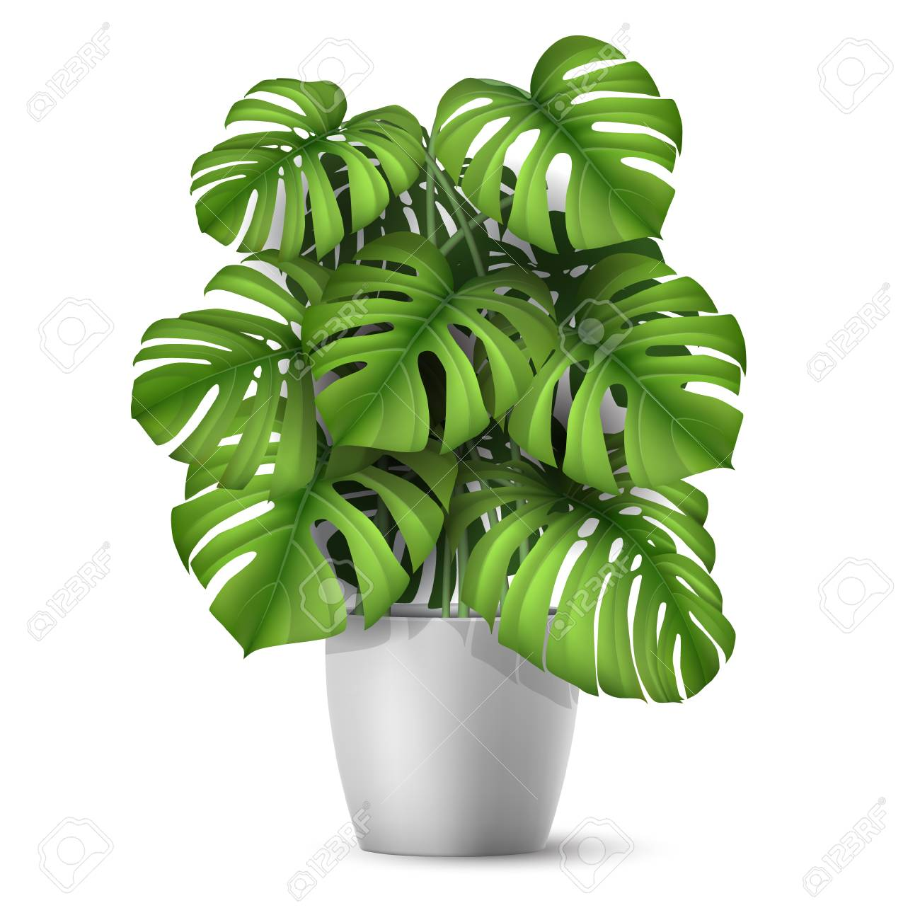 Monstera in a pot. Tropical plant for interior decor of home or office. Vector illustration in vector realistic 3d style. - 99968321