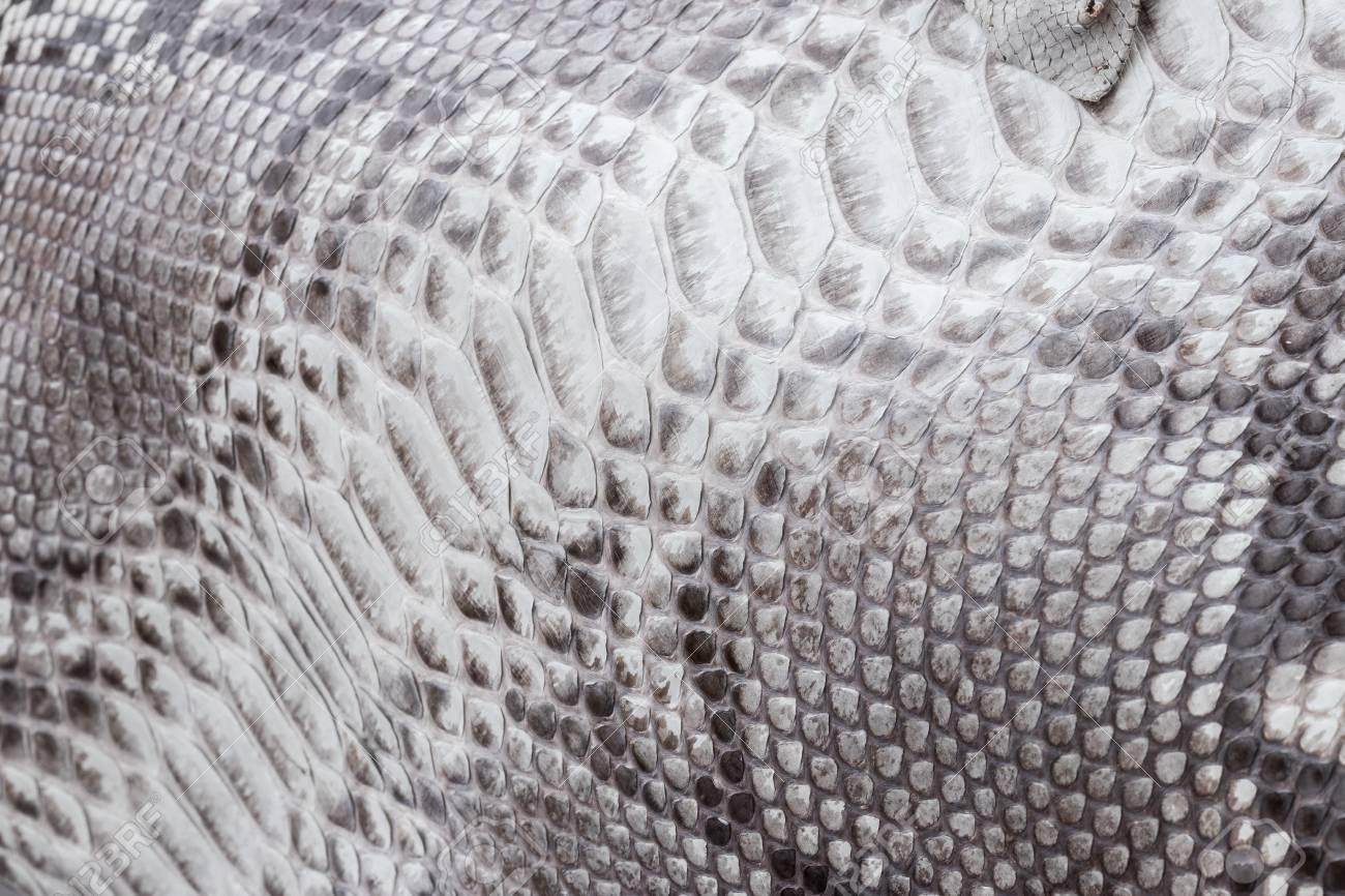 Reptile snake texture closeup, fashion zigzag snakeskin python