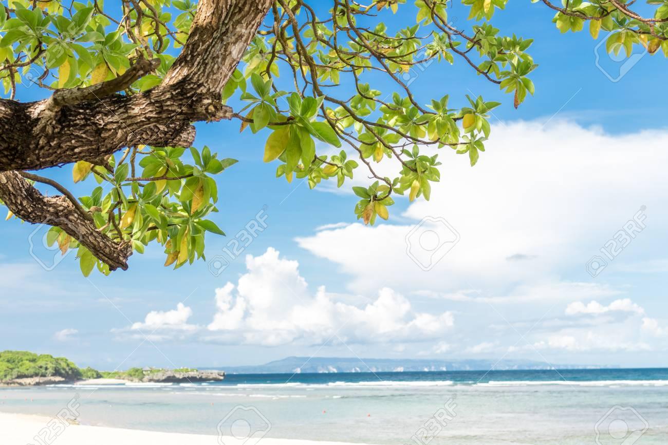 Plants And Tropical Beach Nusa Dua Bali Island Indonesia Stock