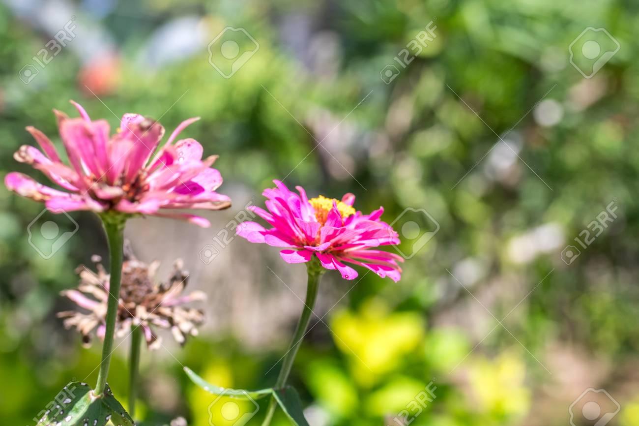 Hintergrund Der Frischen Blumen Draußen Im Park Von Bali-Insel ...