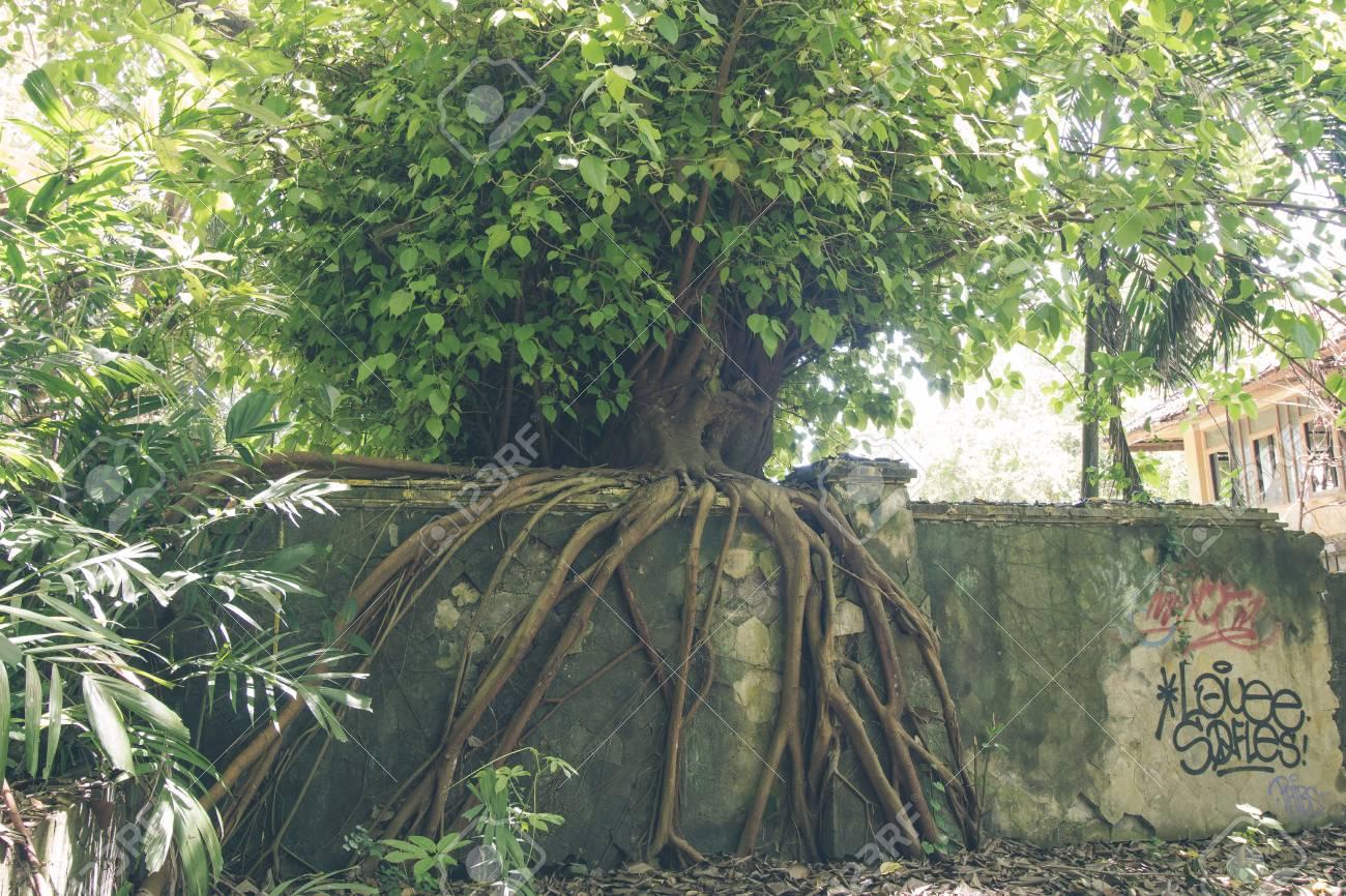 Uitgelezene Tropisch Jungle Regenwoud Op Bali Eiland, Indonesië. Groene YJ-51