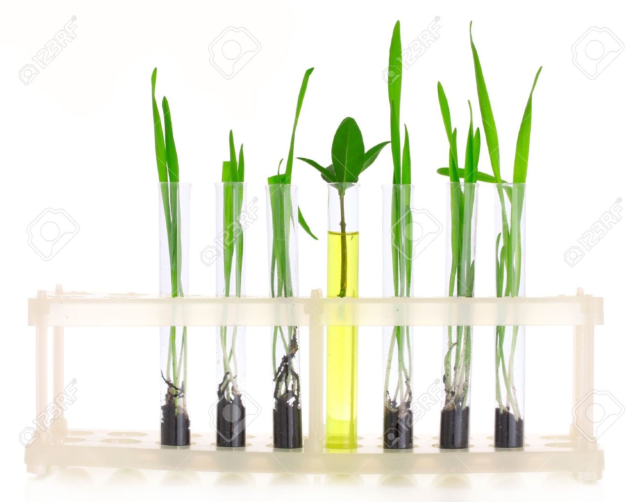 plants in a test tube isolated on white Stock Photo - 9999224
