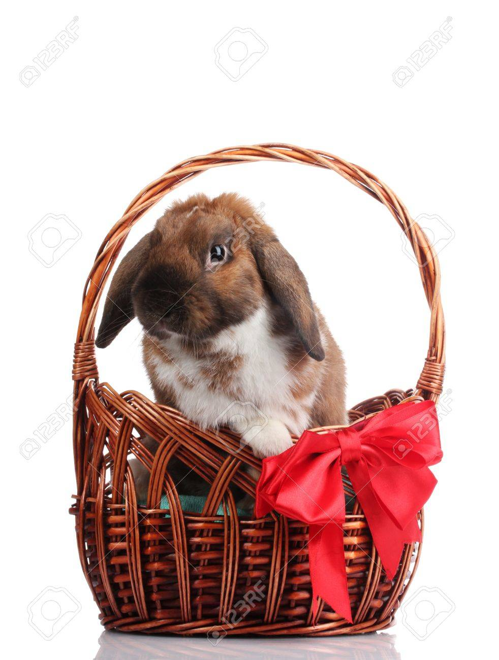 Lop-eared rabbit in a basket with red bow isolated on white Stock Photo - 11903460