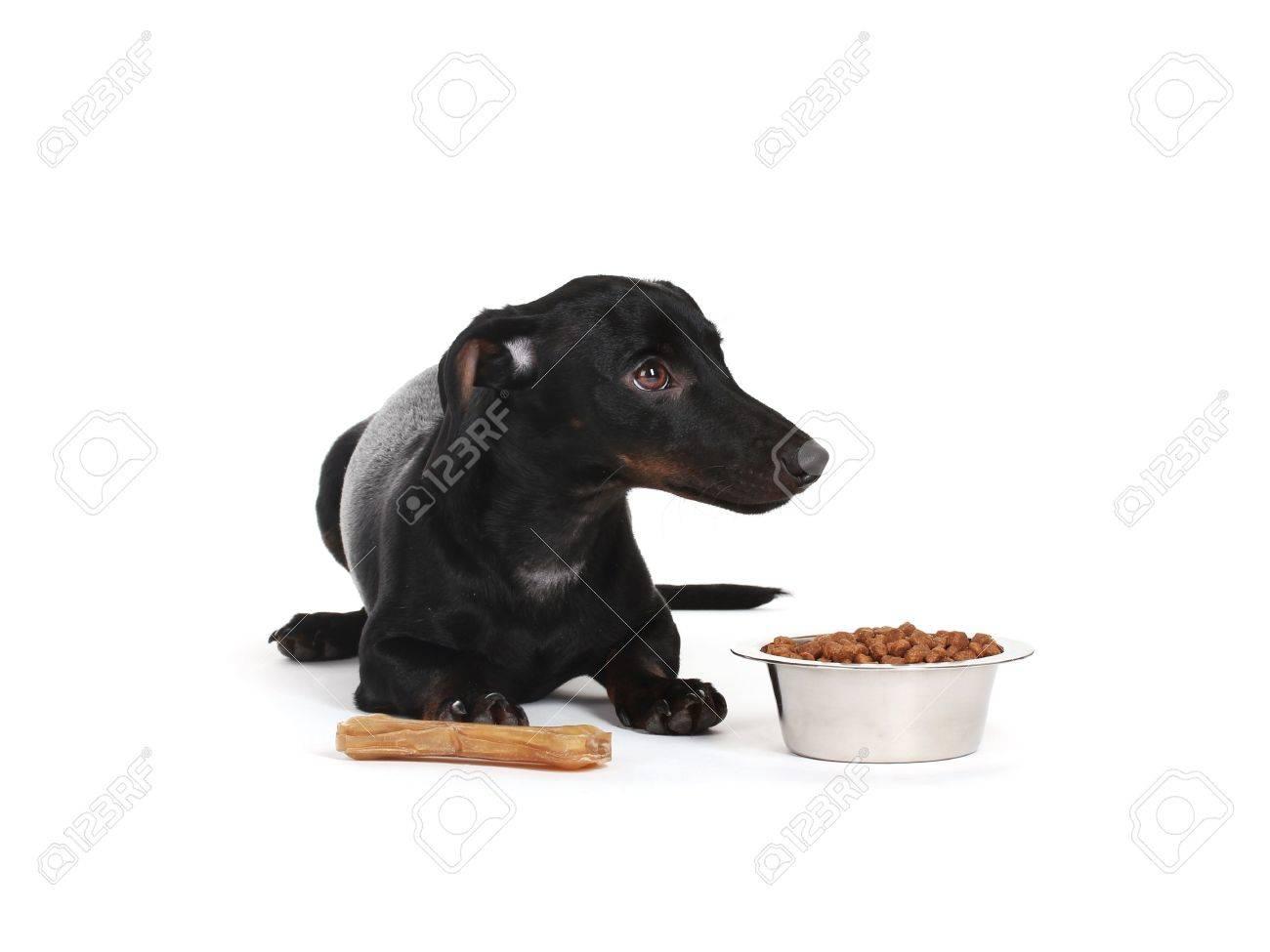 black little dachshund dog isolated on white Stock Photo - 12329860