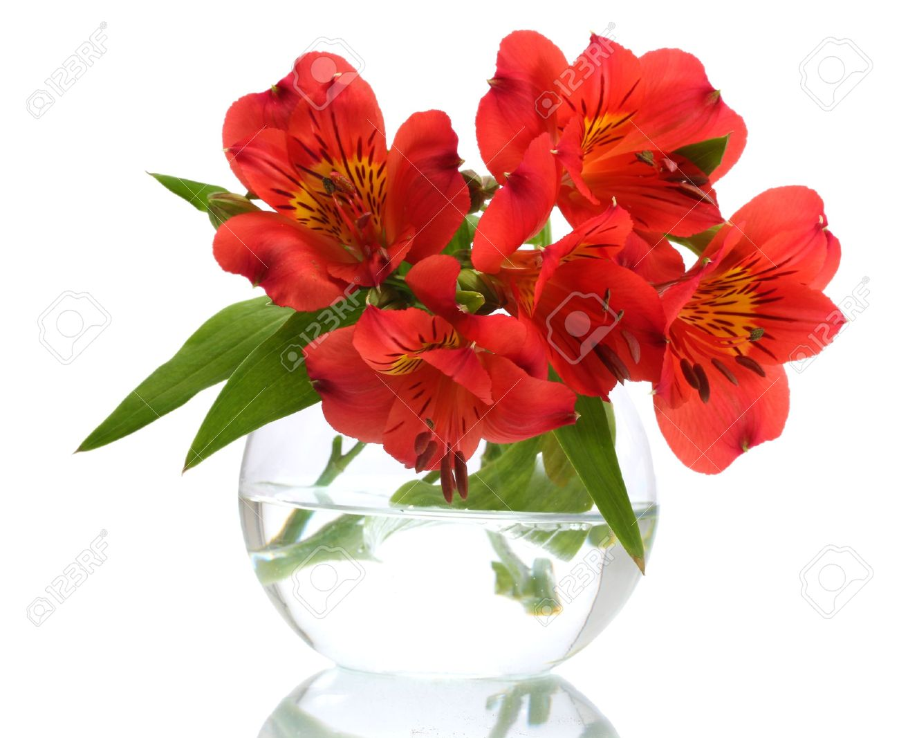 alstroemeria red flowers in vase isolated on white stock photo 12979643 - Flowers In Vase