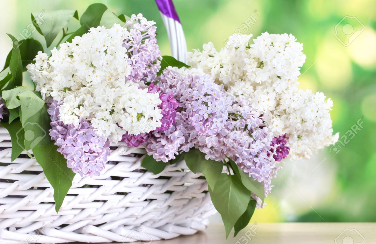 beautiful lilac flowers in basket on wooden table on green background Stock Photo - 13519018