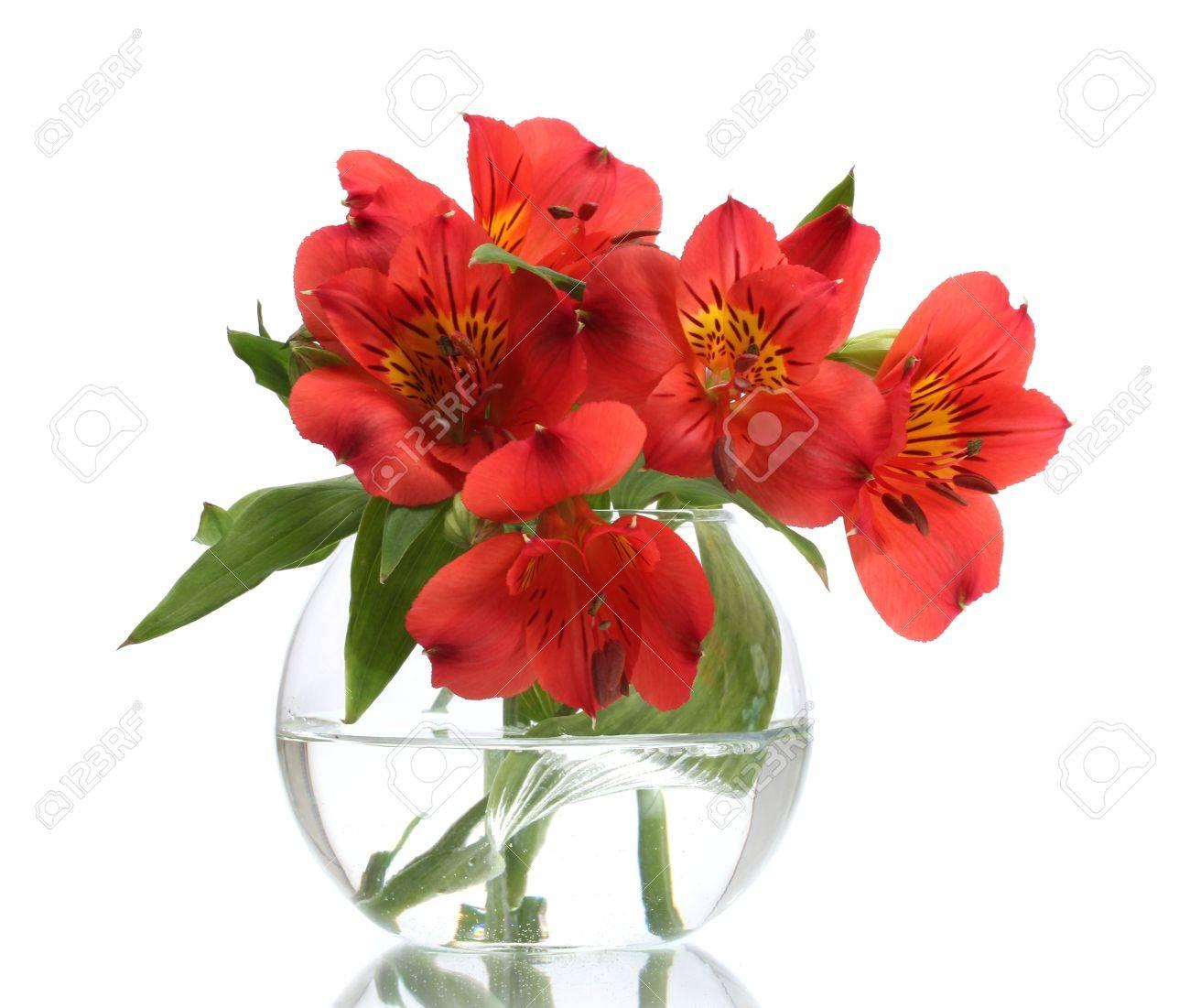 alstroemeria fleurs rouges dans un vase isolé sur blanc Banque d\u0027images ,  13647837