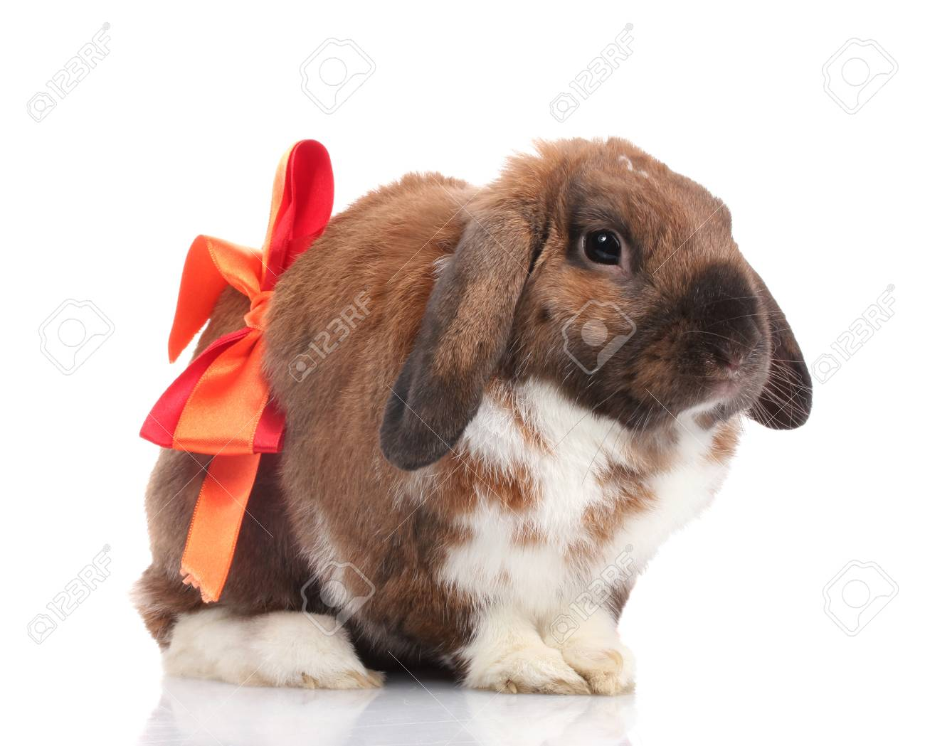 Lop-eared rabbit with red bow isolated on white Stock Photo - 13994239