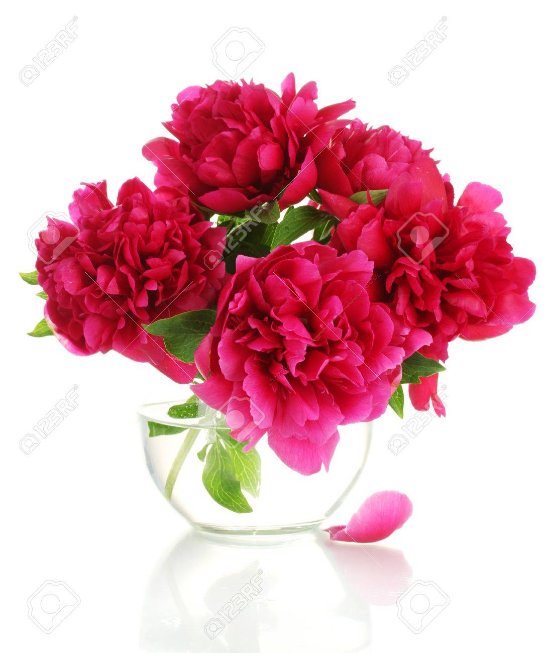 Beautiful pink peonies in glass vase isolated on white stock photo beautiful pink peonies in glass vase isolated on white stock photo 14114903 reviewsmspy