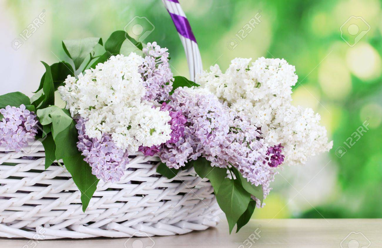 beautiful lilac flowers in basket on wooden table on green background Stock Photo - 14163576