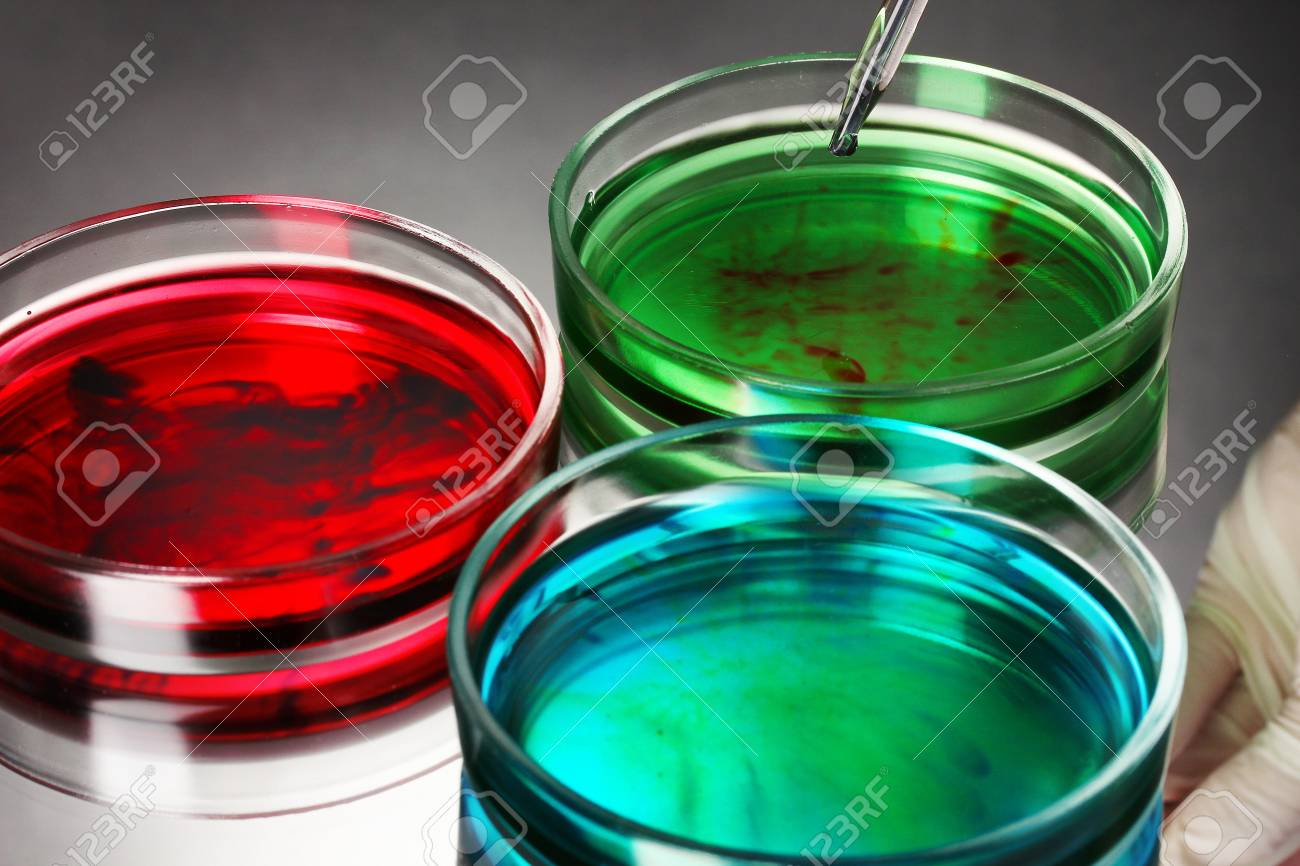 color liquid in petri dishes on grey background Stock Photo - 15414622