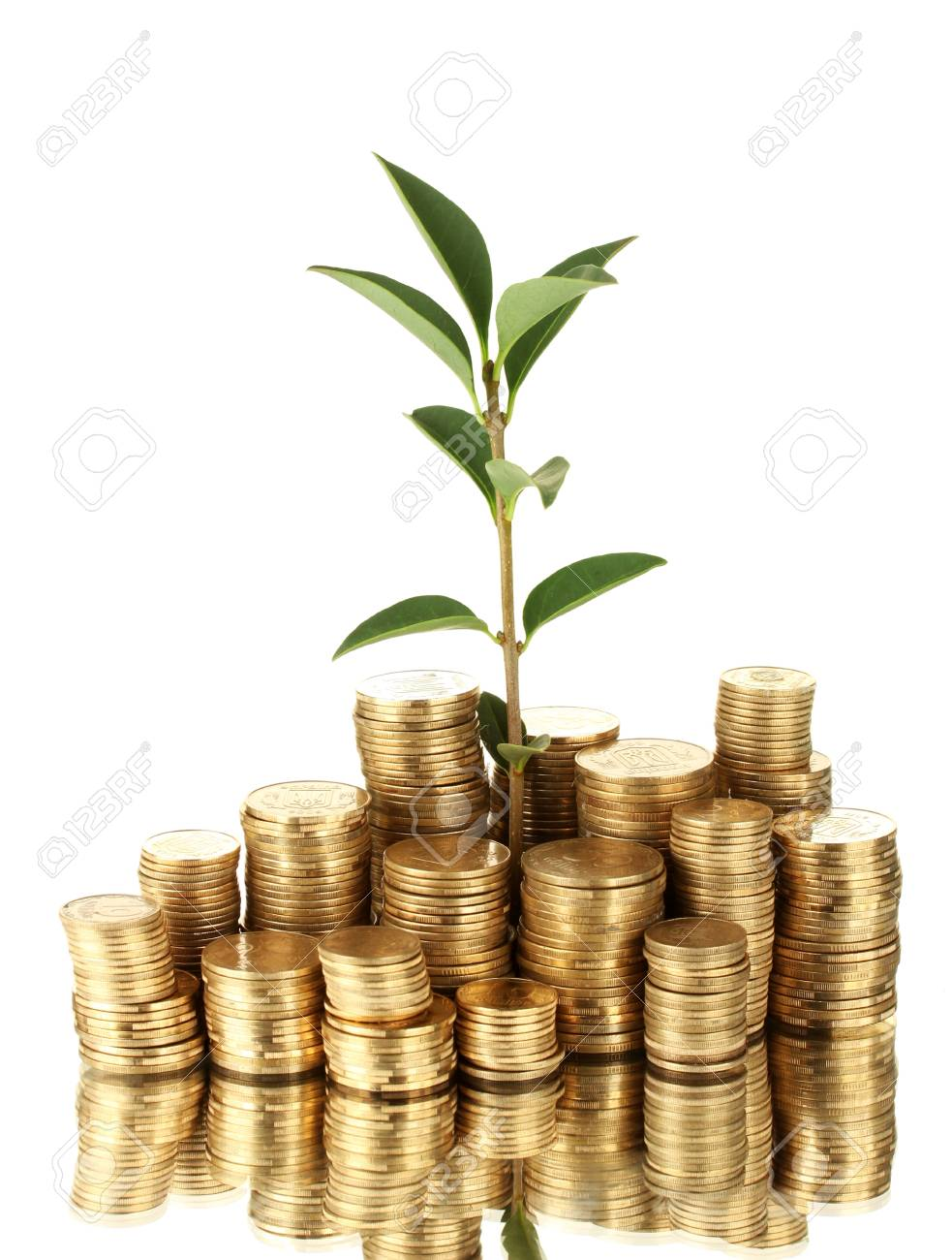 plant growing out of gold coins isolated on white Stock Photo - 16132052