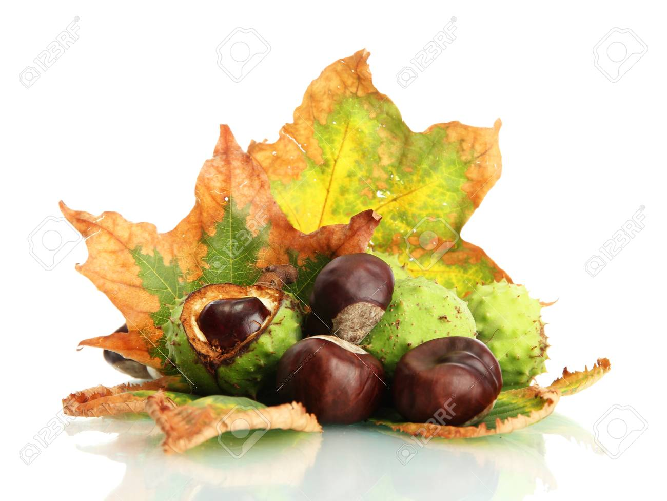 Chestnuts with autumn dried leaves, isolated on white Stock Photo - 16342443