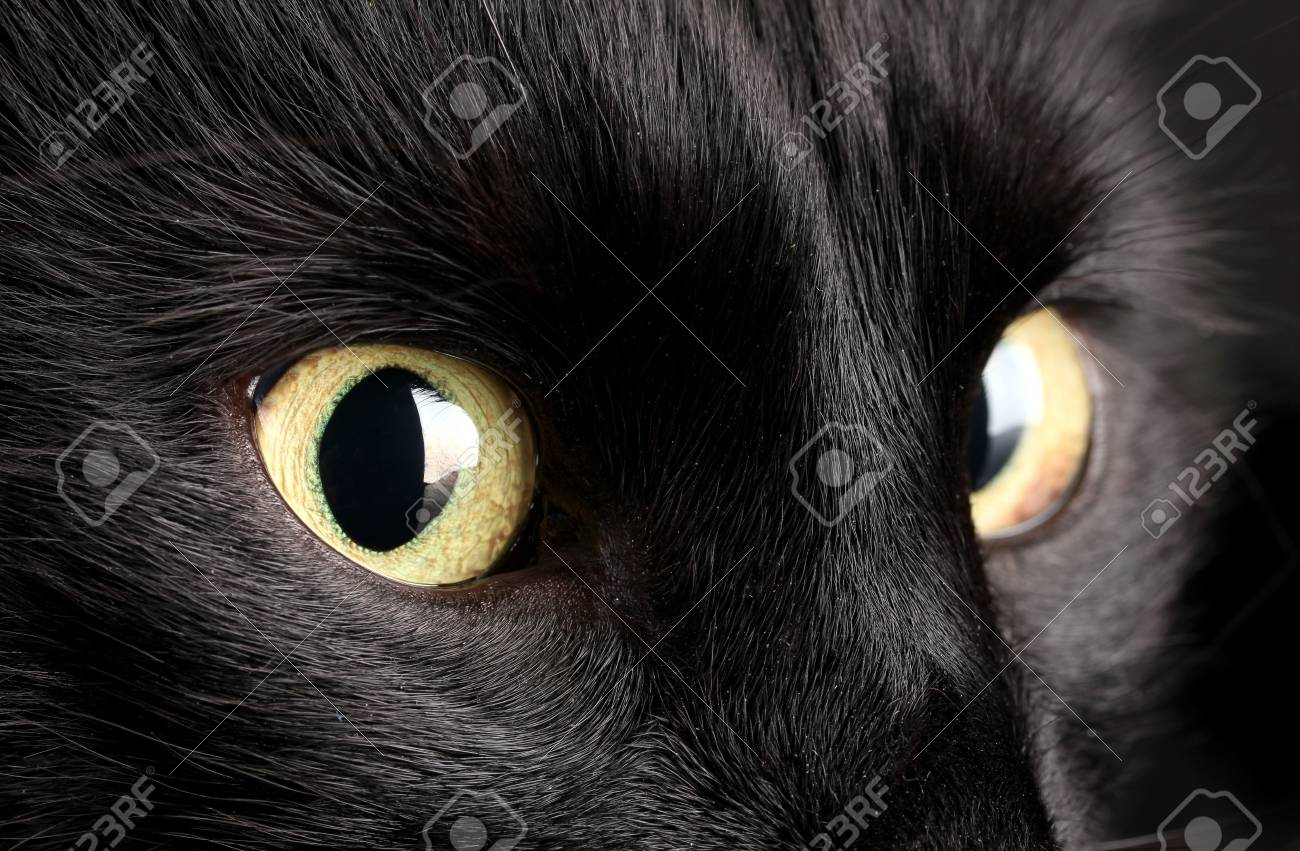 Black cat, close up Stock Photo - 16859658