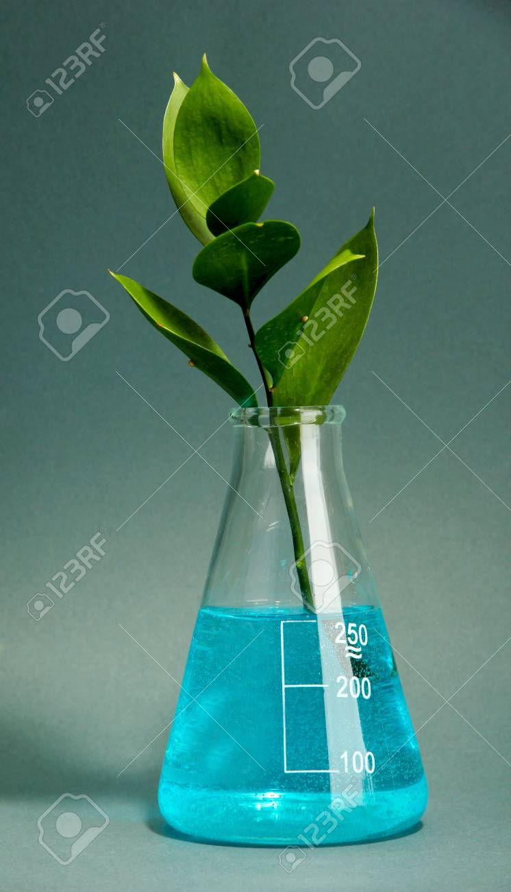 branch with green leaves in test-tube on grey background Stock Photo - 16859519