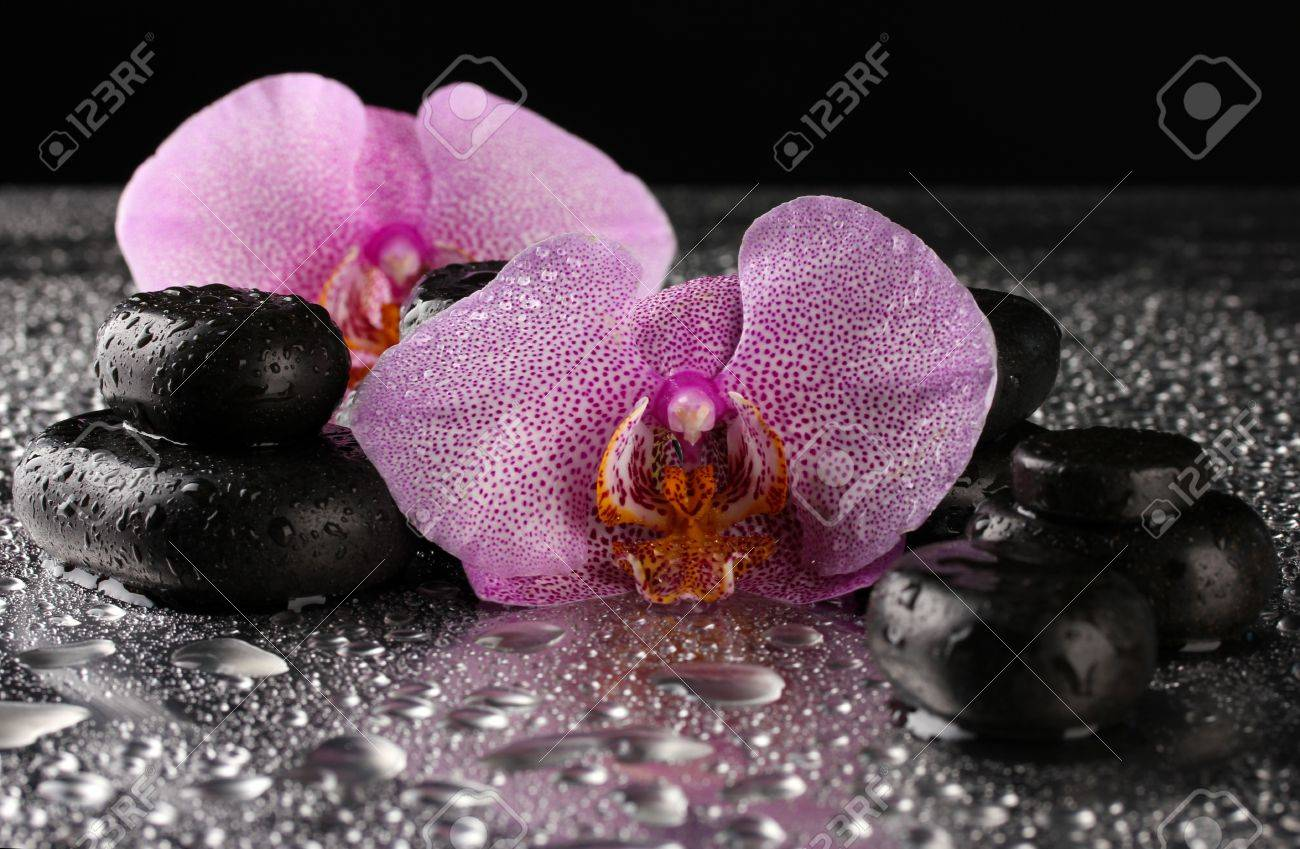 Spa stones and orchid flower, on wet grey background Stock Photo - 16861062