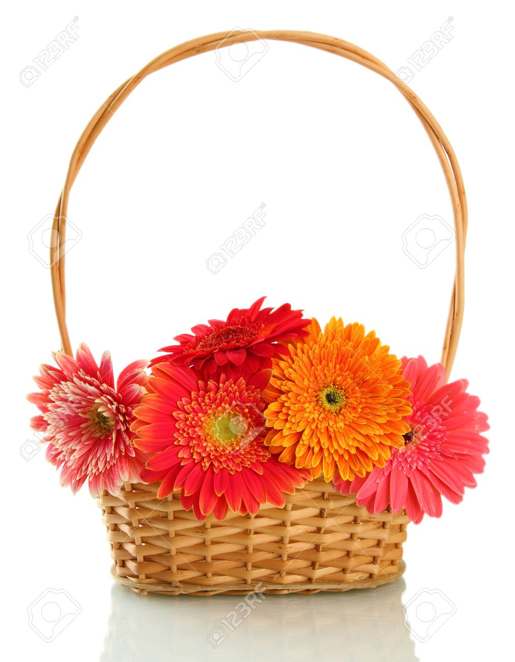 beautiful gerbera flowers in basket isolated on white Stock Photo - 17111857