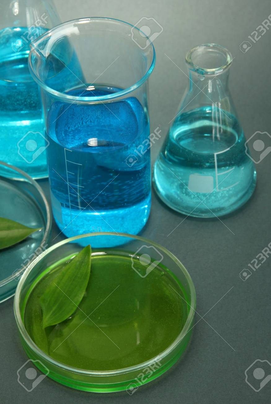 test-tubes and leaf tested in petri dish on grey background Stock Photo - 17143408