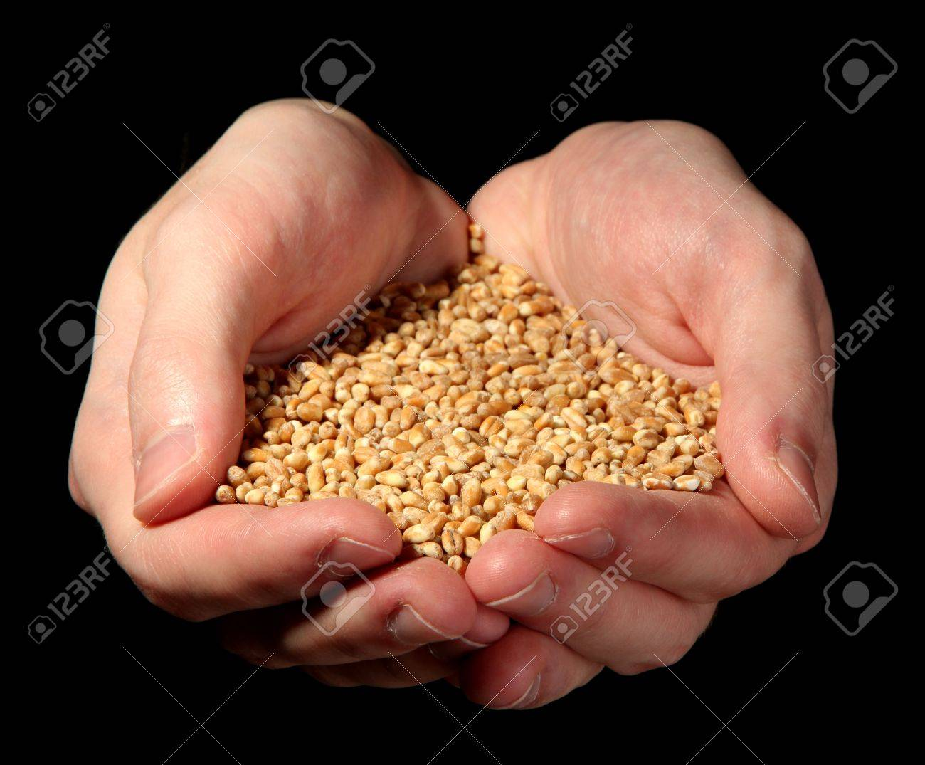 man hands with grain, on black background Stock Photo - 17209297