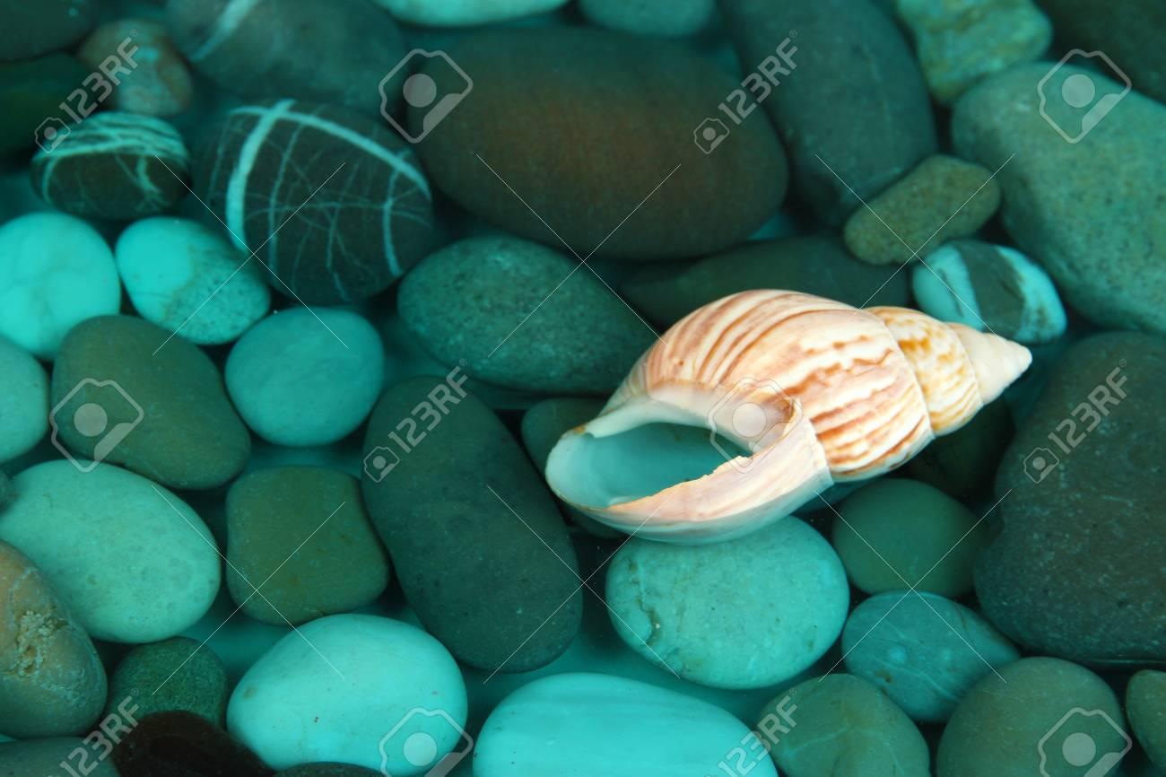 Fondo del mar con conchas y piedras Foto de archivo - 22021657