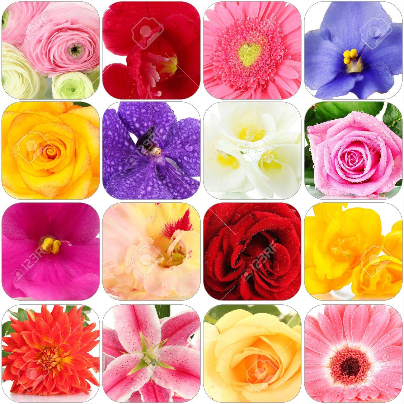 Collage of different beautiful flowers stock photo picture and collage of different beautiful flowers stock photo 22182178 izmirmasajfo