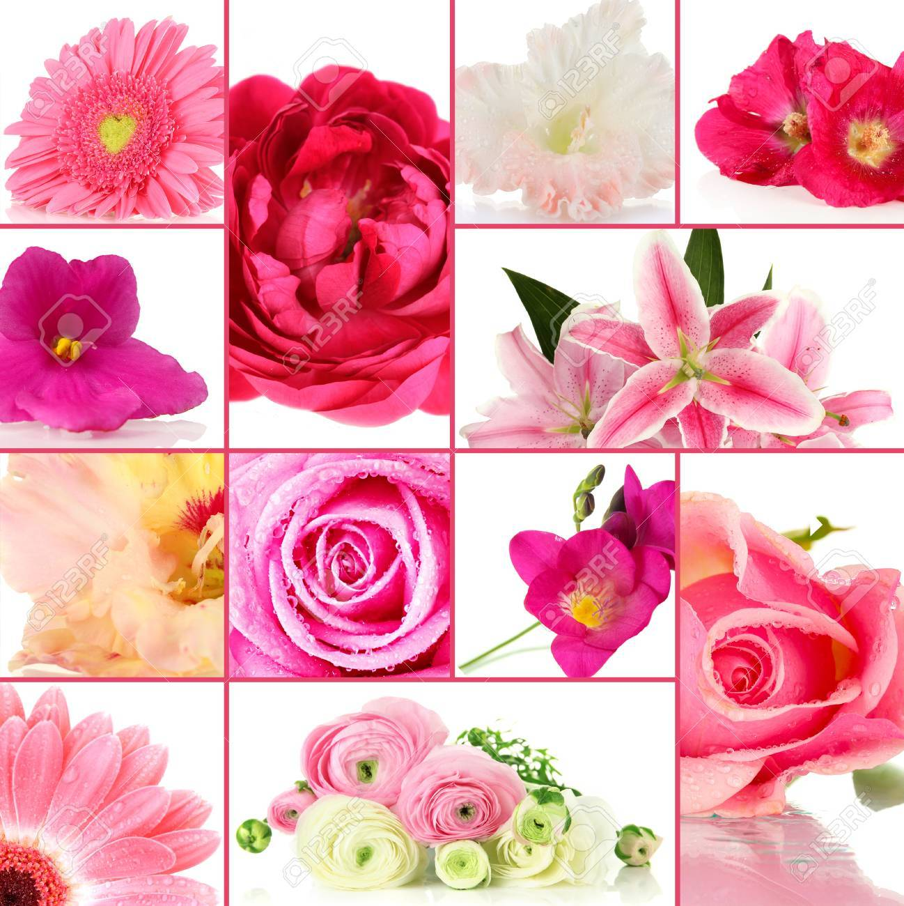 Collage of different beautiful flowers stock photo picture and collage of different beautiful flowers stock photo 22364219 izmirmasajfo