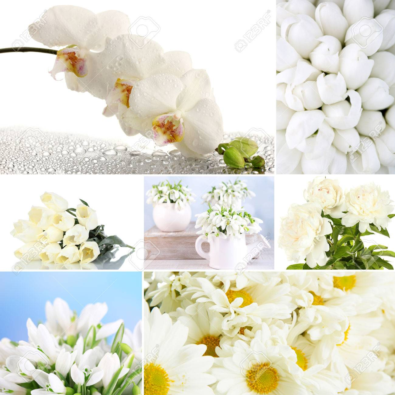 Collage Of Different White Flowers Stock Photo Picture And Royalty