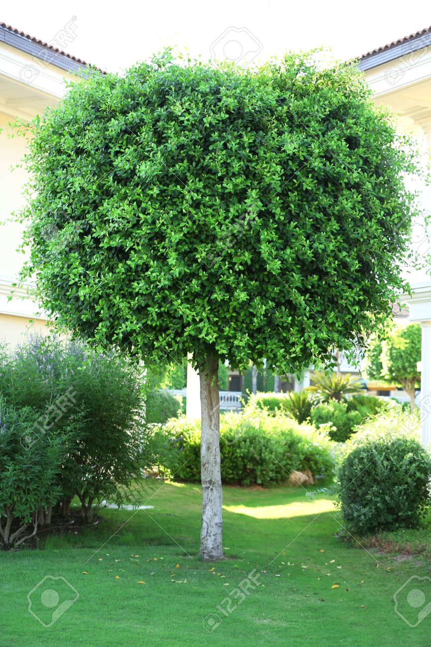 Beautiful Tree And Bushes In Garden Stock Photo   30101154