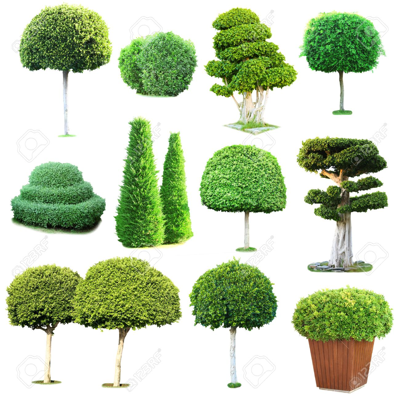 Collage Of Green Trees And Bushes Isolated On White Stock Photo