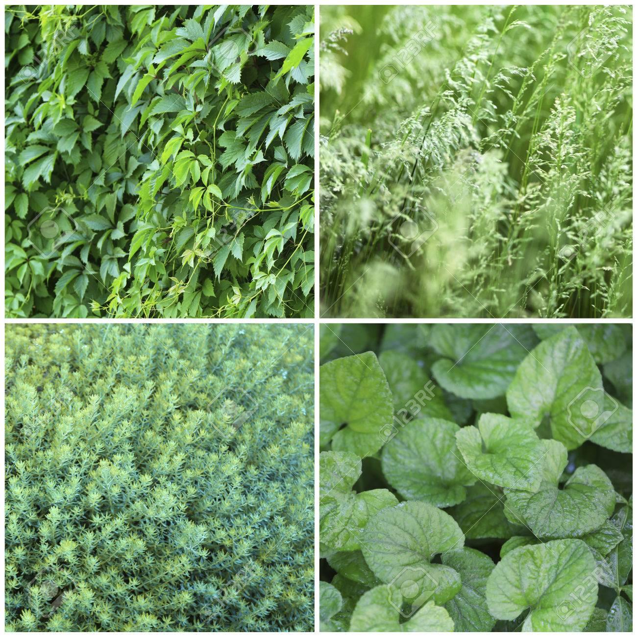 Ansprechend Grüne Pflanzen Galerie Von Grüne Proben Collage Standard-bild - 35556807