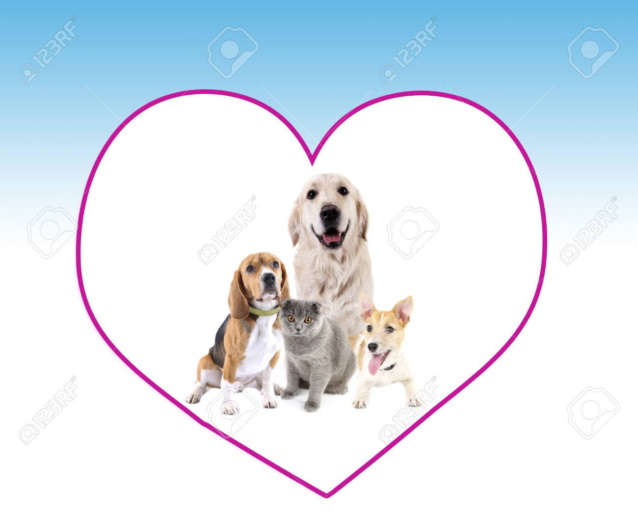 Cute Pets In Big Heart Frame On Light Blue Background Stock Photo ...