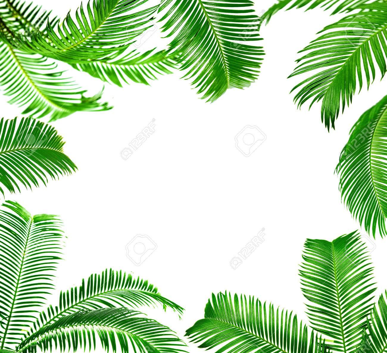Rahmen Aus Grunen Palmenblatter Isoliert Auf Weissem Lizenzfreie