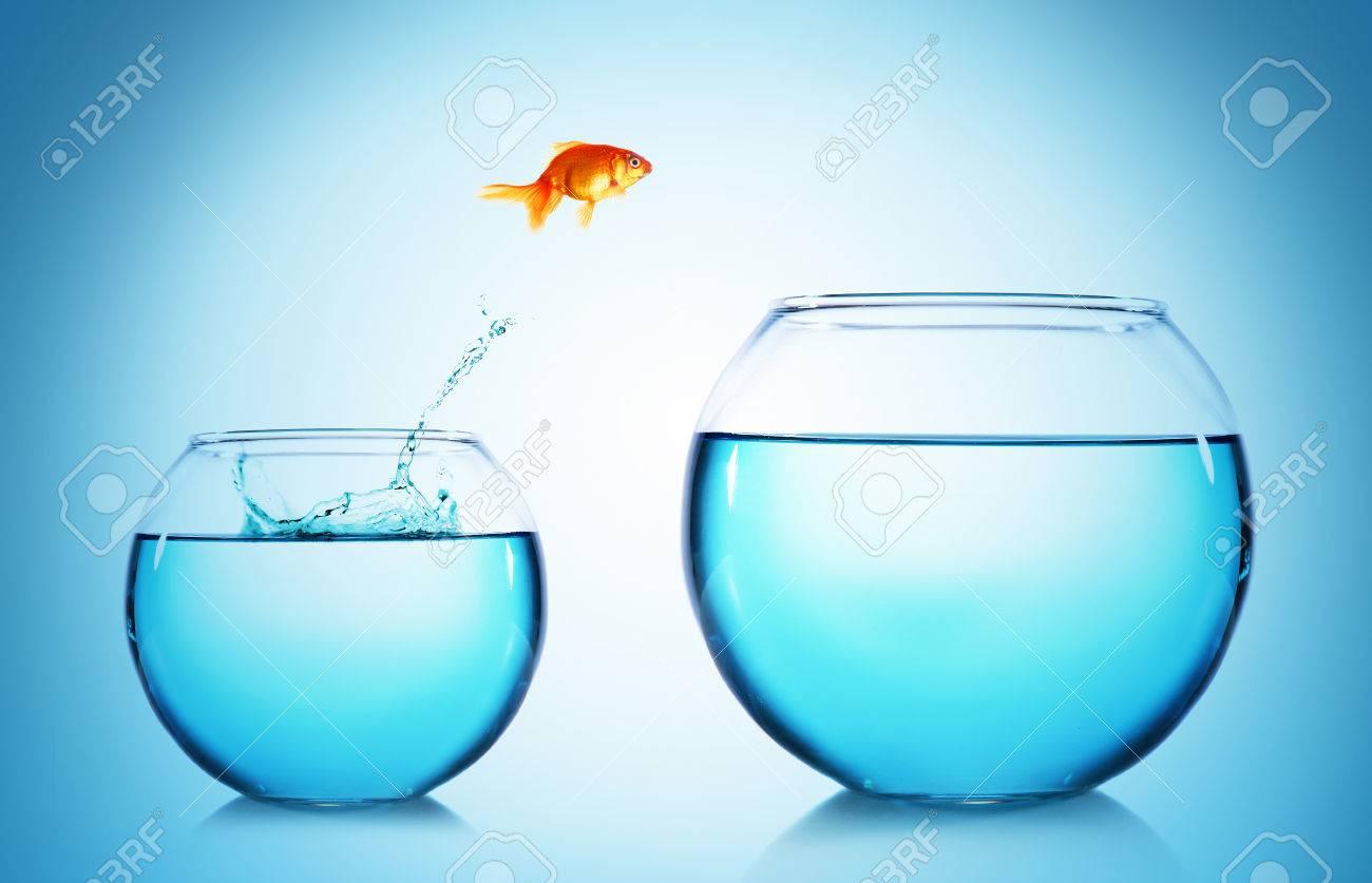 Hervorragend Goldfisch, Springen Aus Glas Aquarium, Auf Blauem Hintergrund  BU79
