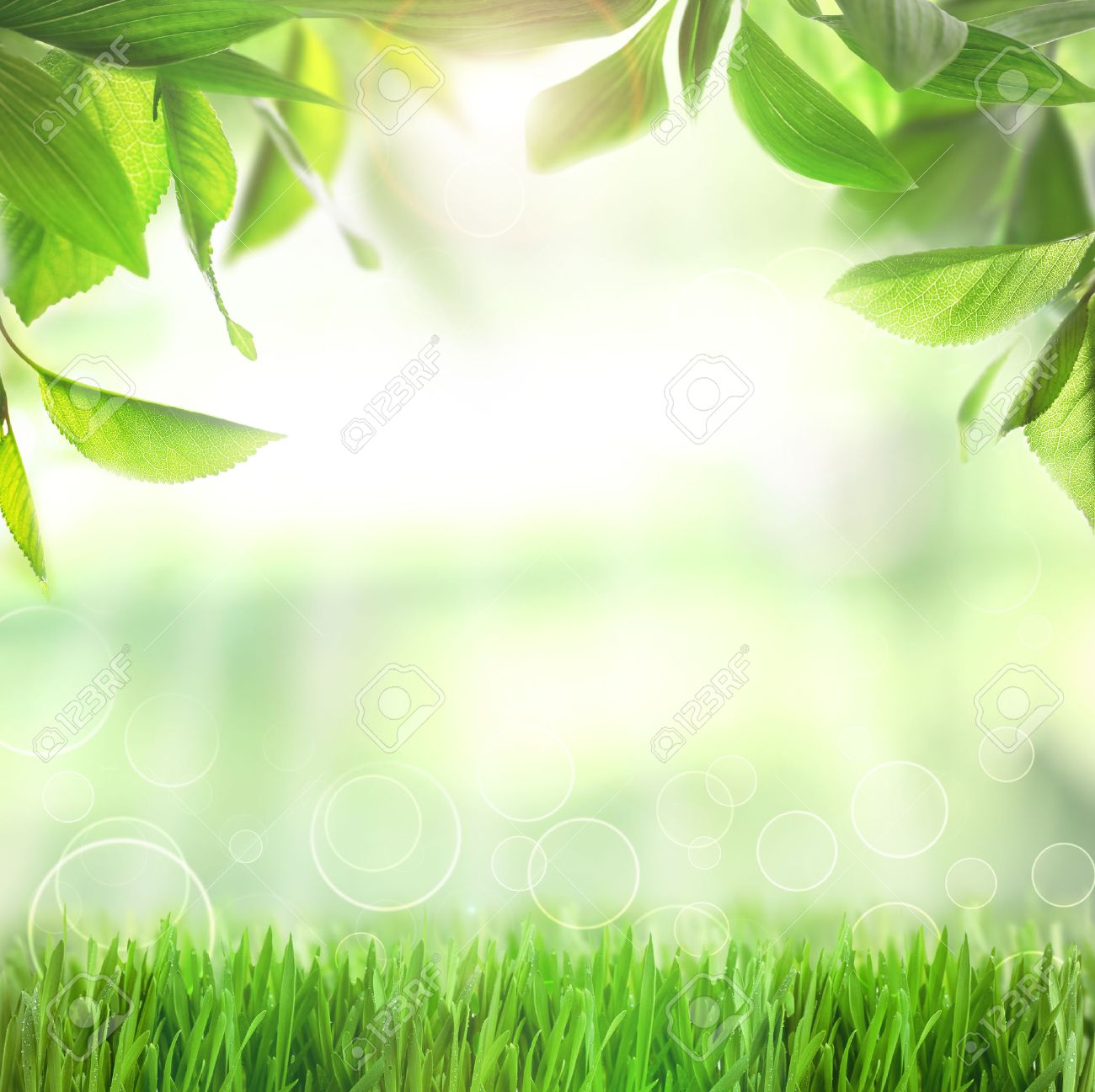 spring or summer season abstract nature background with green