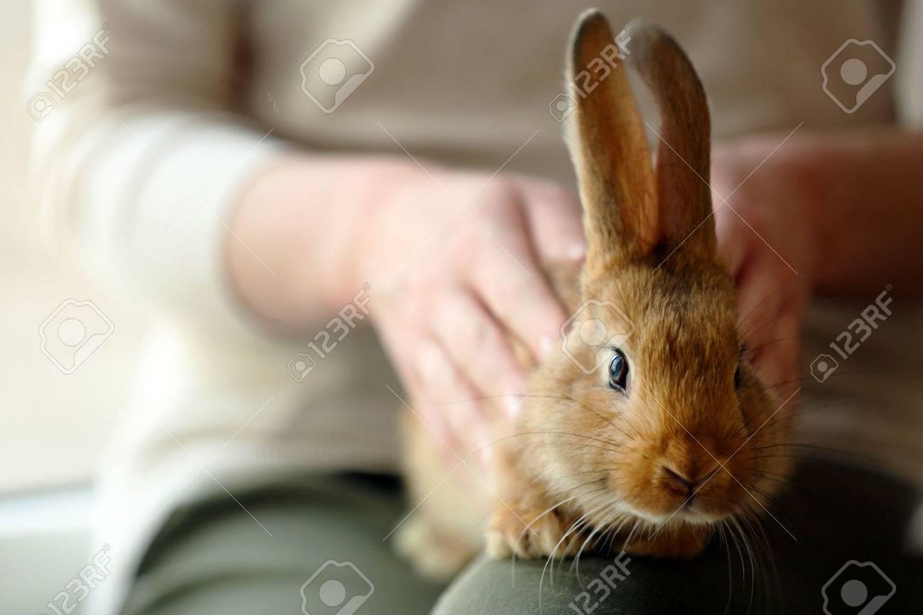 Femme tenant le lapin mignon petit fermer Banque d'images - 49224110