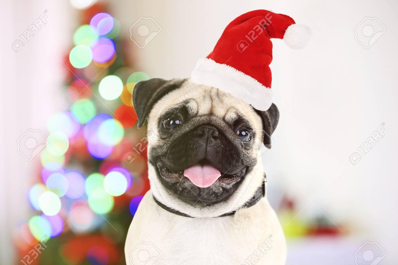 4432550720391 Funny dog with Santa hat near Christmas tree Stock Photo - 51719928