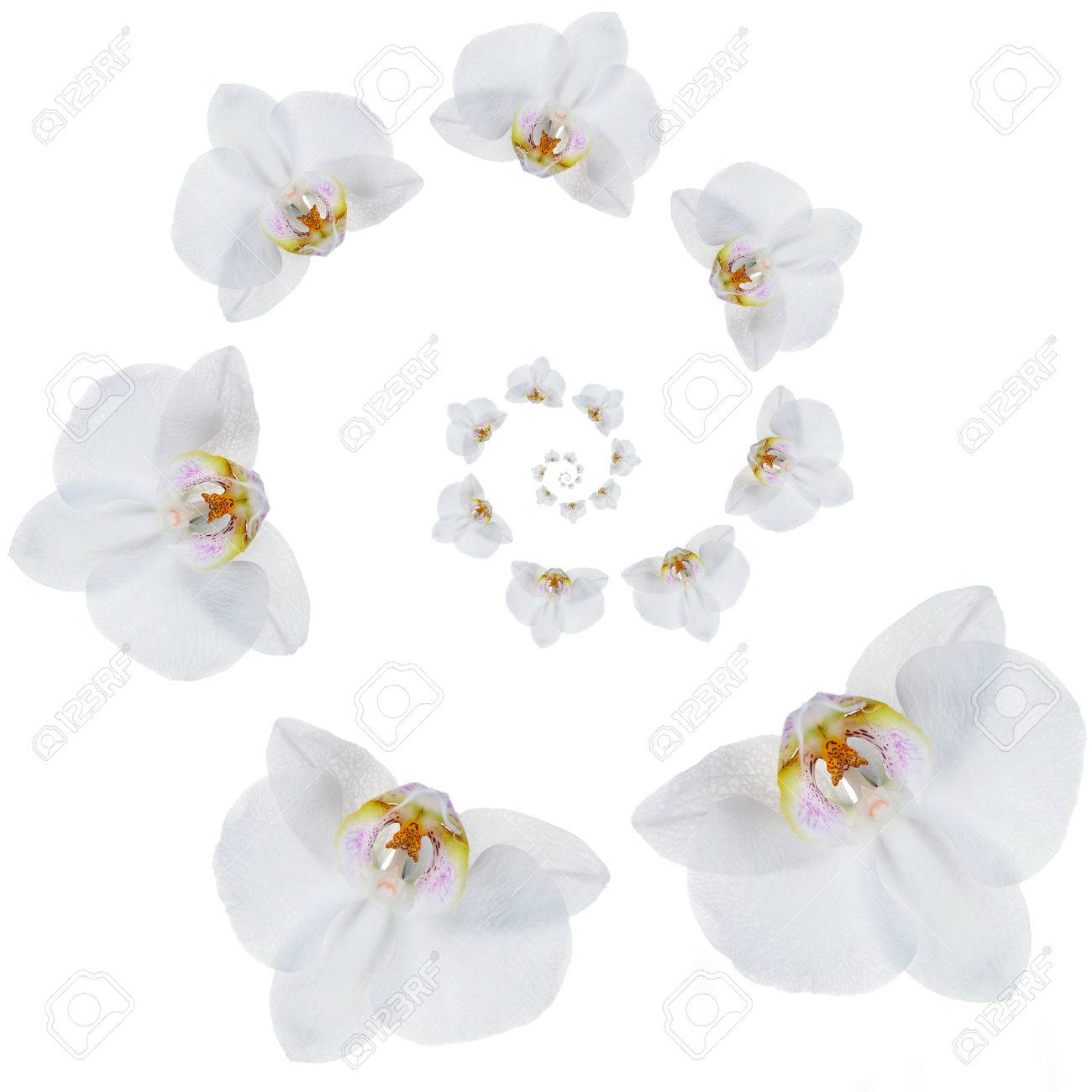 Spirale De Fleur D Orchidee Tropicale Blanche Isolee Sur Blanc