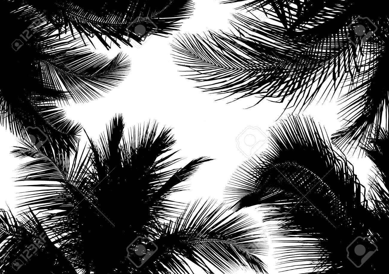 Silouette Der Schonen Palmen Blatter Isoliert Auf Weiss Lizenzfreie