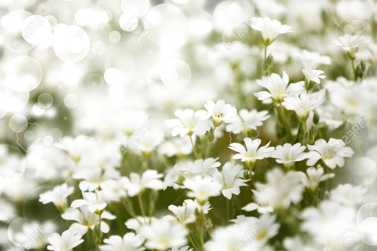 Beautiful Flowers On Meadow With Bokeh Stock Photo Picture And