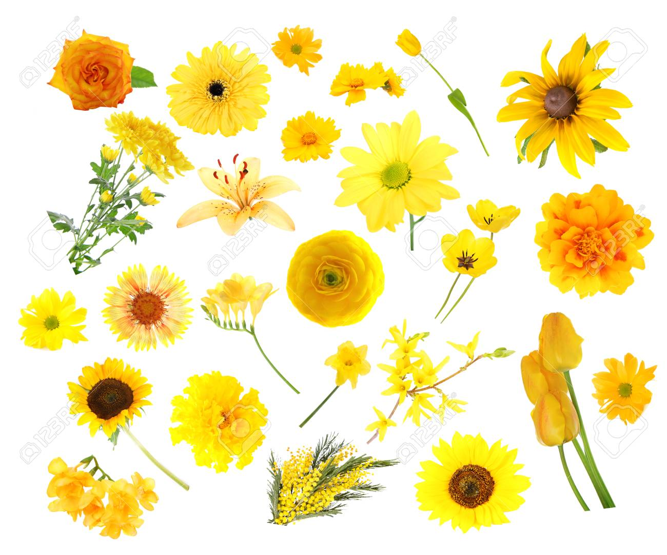 Collage Of Yellow Color Flowers Isolated On White Stock Photo