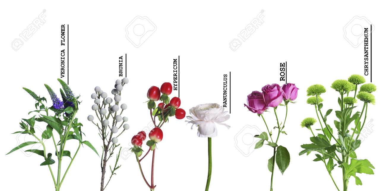 Beautiful Various Flowers With Names Isolated On White Background