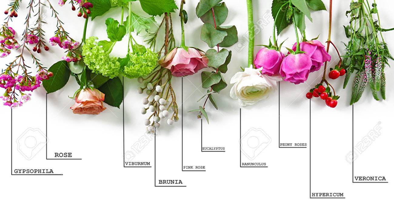 Beautiful Flowers With Names Choice Image Bouquet Decoration Pink Flower