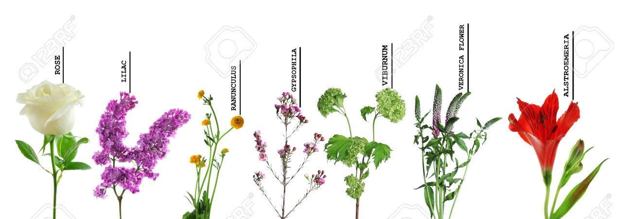 Bekend Mooie Verschillende Bloemen Met Namen, Geïsoleerd Op Een Witte #LU11