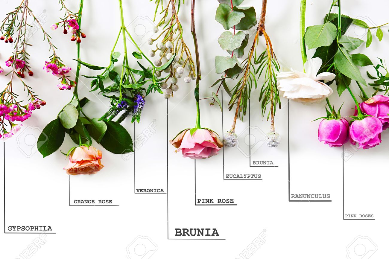 Beautiful Various Flowers With Names On White Background Stock Photo