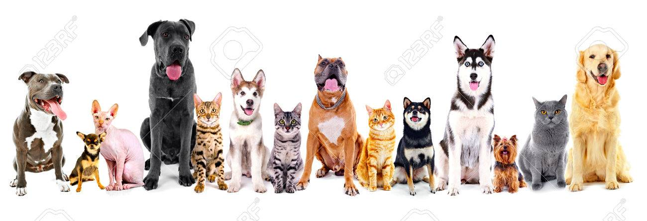 Group of sitting cats and dogs, isolated on white - 67407862