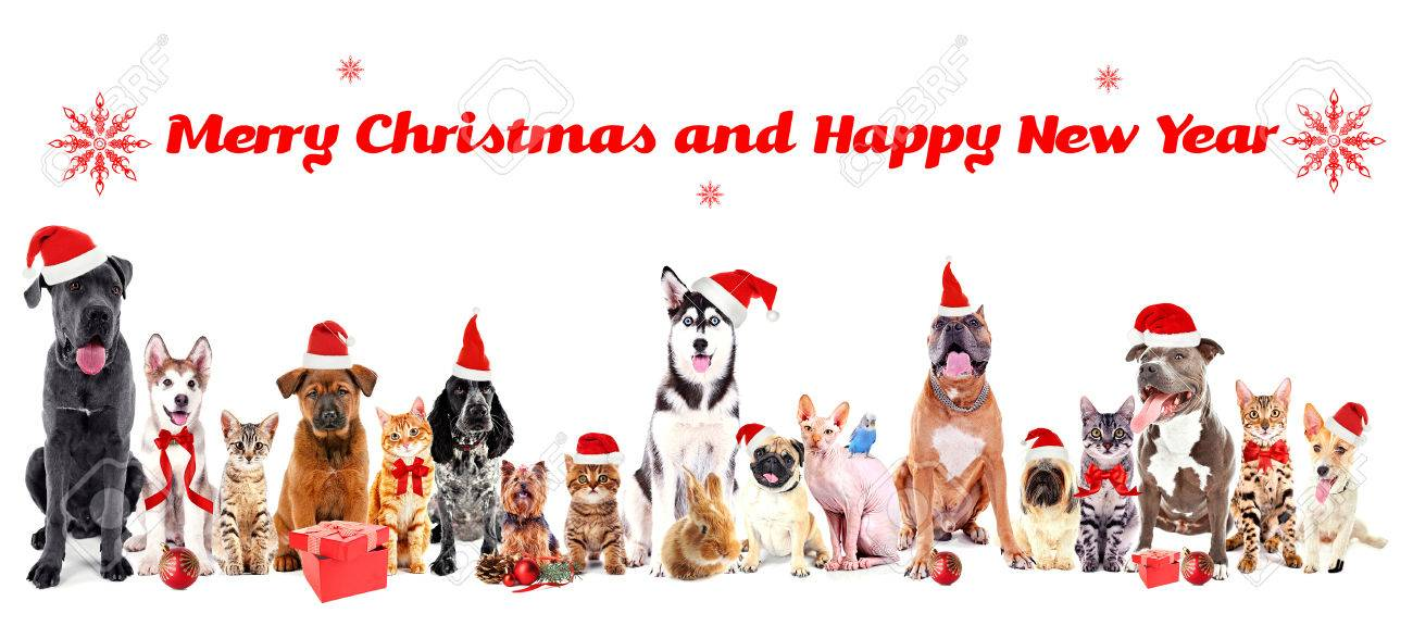 Merry Christmas Puppies.Funny Christmas Pets Merry Christmas And Happy News Year