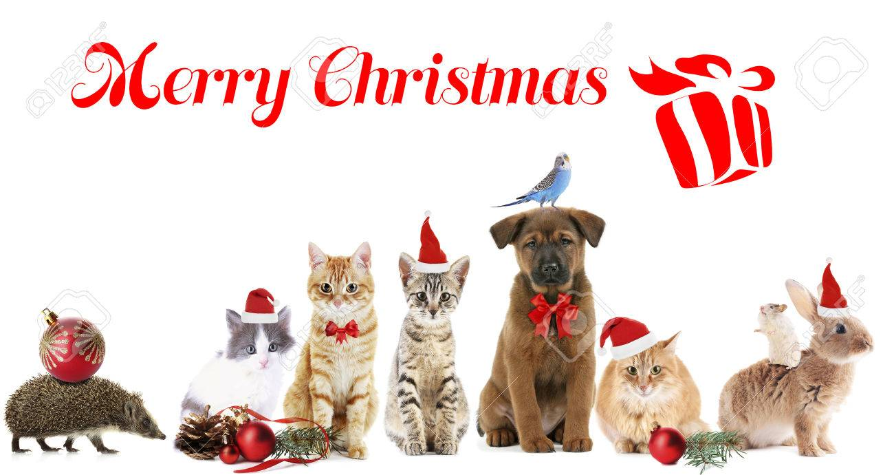 Funny Christmas Pets Merry Christmas Stock Photo Picture And