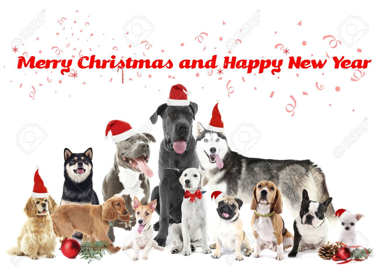 Funny Christmas Dogs Merry Christmas And Happy News Year Stock