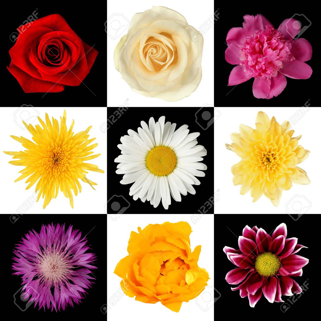 Beautiful flowers different flowers collage stock photo picture beautiful flowers different flowers collage stock photo 68451124 izmirmasajfo
